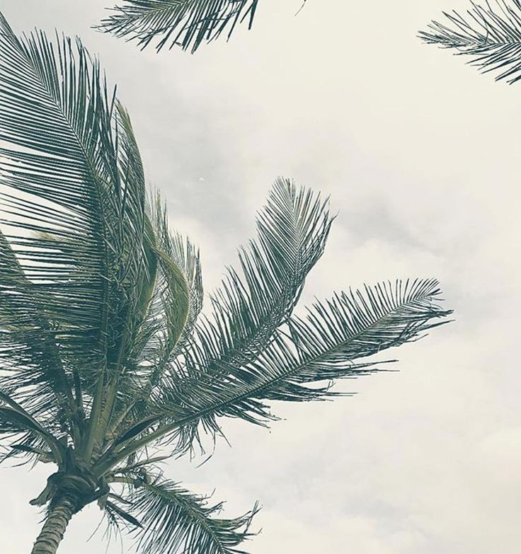 Love your perspective  @queeseling #nesterseyeview  The palms are perfection.