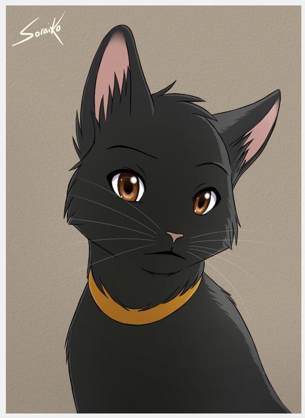Imagem Relacionada Cat ColorsBlack CatsFluffy KittensAnime