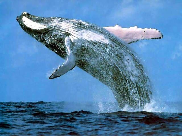 blue whale                                                                                                                                                                                 Más