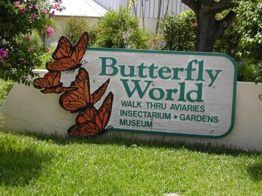 Butterfly world is one of the most beautiful places I've ever been. It was like paradise