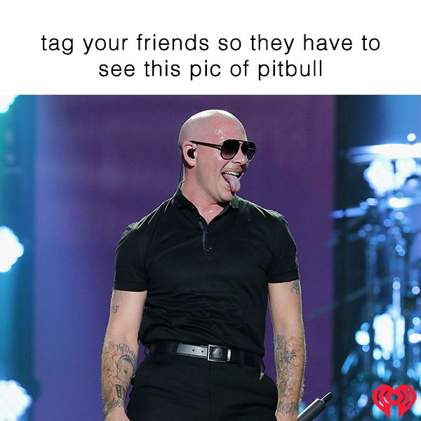 Pin by iHeartRadio on Musical Memes Pitbull photos