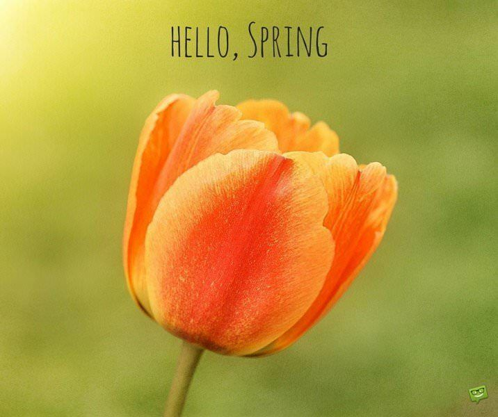 Hello Spring Quotes Spring Flowers Spring Hello Spring