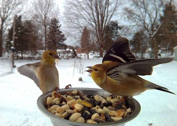 Поставил кормушку за окном и весь год фотографировал птиц, которые прилетали покушать длиннопост, фото, еда, птицы, кормушка