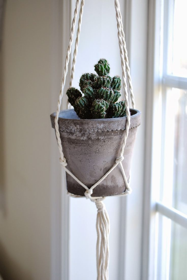 1000 Images About Greenery On Pinterest Plant Pots Tall Cactus