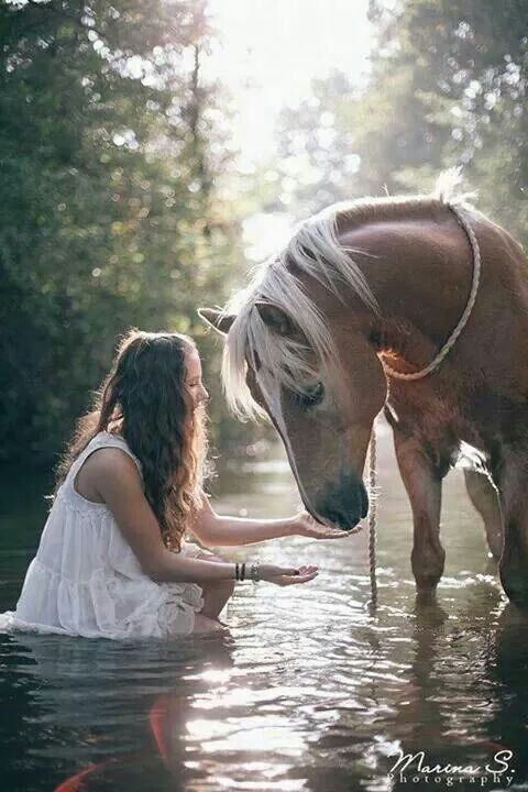 palomino horse in a river with friend-yes they really do love water