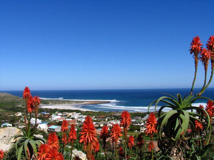 Aloe Aloe you lovely winter seascape!  http://www.scarboroughproperty.co.za/  http://www.scarboroughproperty.co.za/