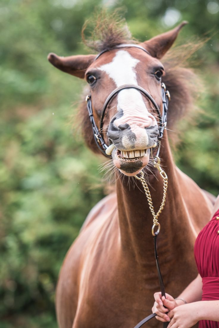 Bloopers & Outtakes 2017 - Specialist UK Equine Portrait Photographer, Essex I via sophiecallahanblog.com I #equinephotography #photography #equineblogger