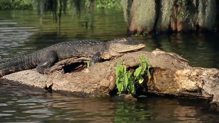 Tony Tucker - The Old Man -The Strat & The Swamp - YouTube HD