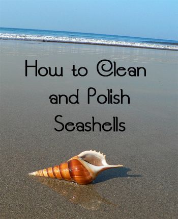 how to clean and polish shells