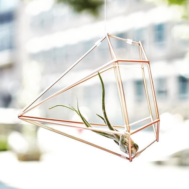 Add A Little Greenery To Your Home This Weekend With These Simple Air Plants Using Prisma Decor