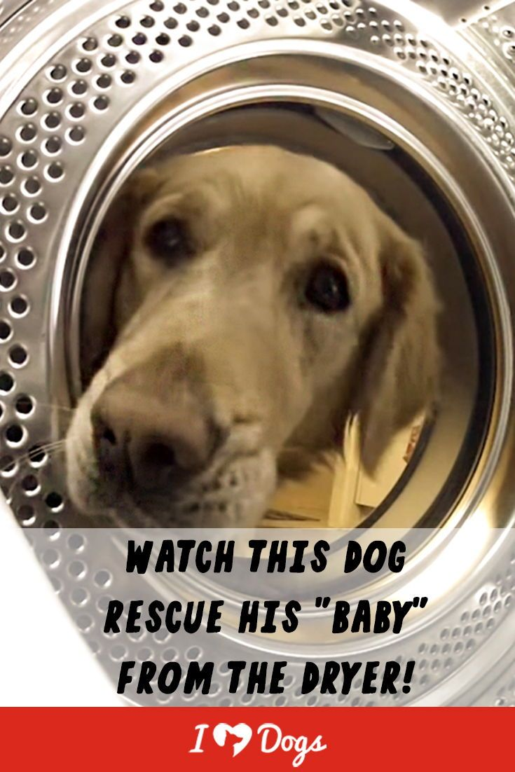 Dog Rescues His Baby From The Dryer Rescue Dogs Funny Dog Memes Baby Dogs