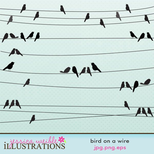 119 best Birds on a wire images on Pinterest | Little birds ...
