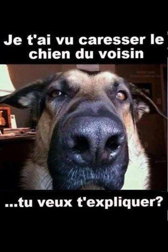 Je t'ai vu caresser le chien du voisin...