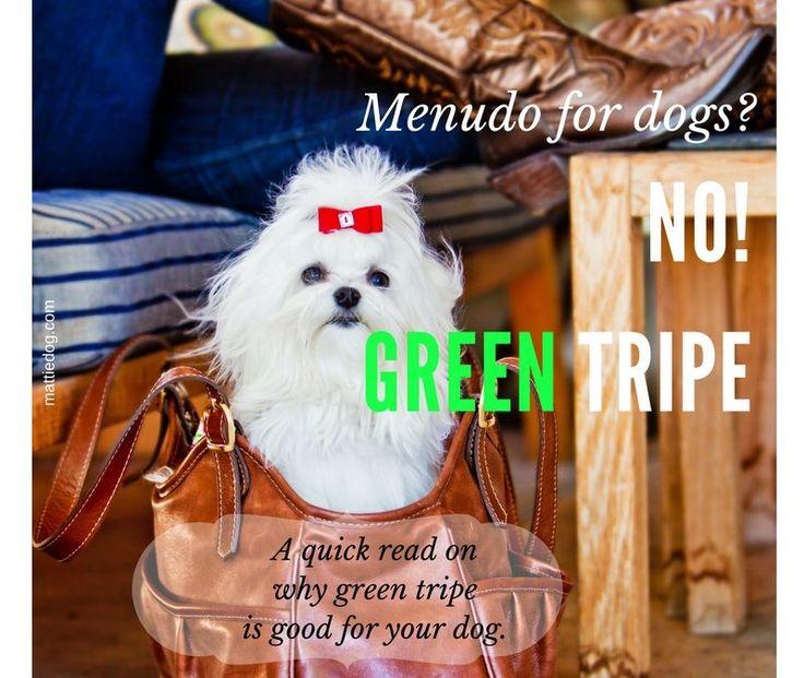 Menudo For Your Dog? No, Green Tripe!