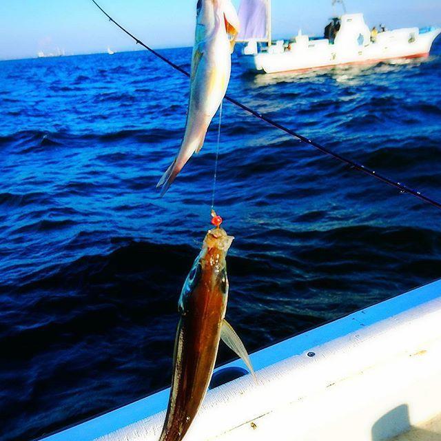【papipupeponta】さんのInstagramをピンしています。 《今日は#游漁船 で#アジ#釣り #金沢八景#晴れ#魚釣り#アジ#初心者#海#空#イソメ食い付き良すぎ#イワシのミンチが大好物#夢中#食べるのが楽しみ#fishing#sky#sea#fun#smile#instagood#instashot》