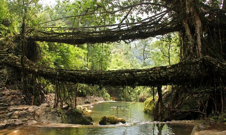 Patrick Rogers of the Living Root Bridges Project is a man who tries to save one of humanity's best examples of working in perfect harmony with nature.