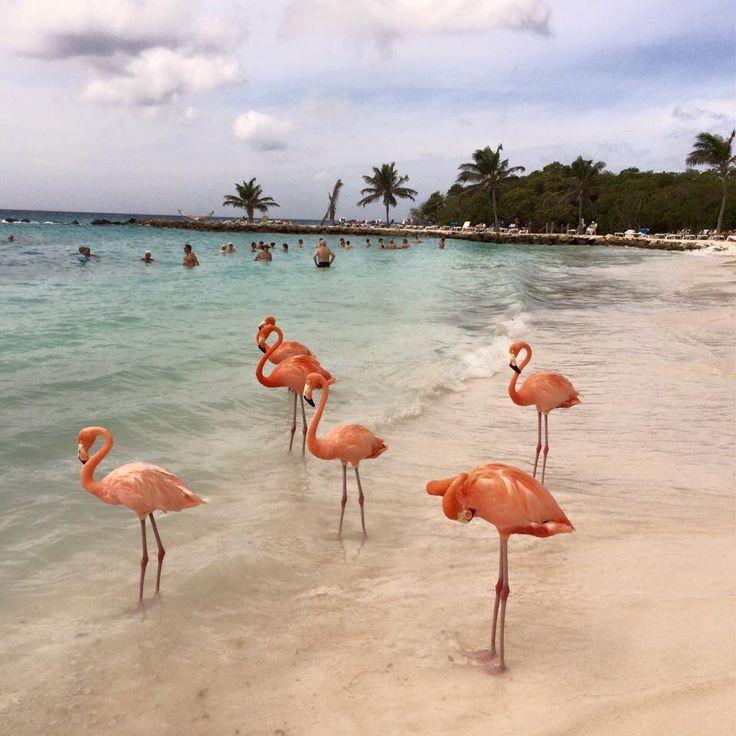 Oranjestad, Aruba. (Flamingo Beach)
