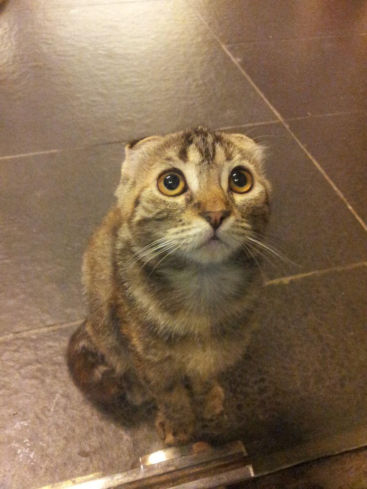 laser cat declawing