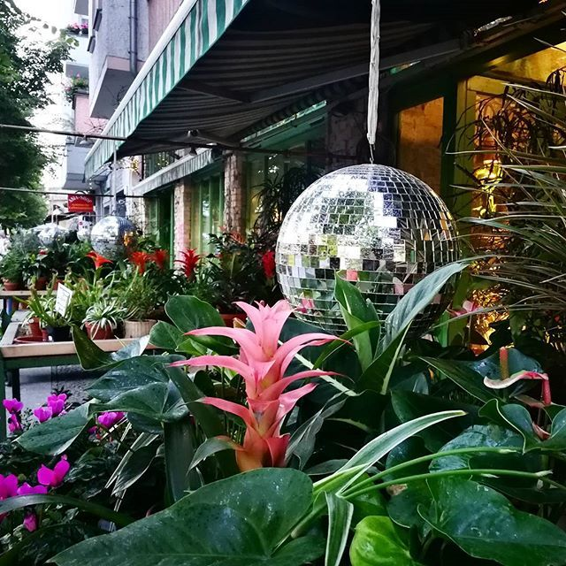 Friday-funday!   And one of the nicest flower - botanical spot in Berlin :) #friyay #letsdance #berlin #suculent #plant #plants #shop #disco #discoball #discokugel #shine