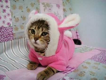 THE EASTER BUNNY CAT