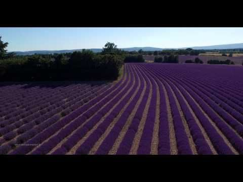 A hint of lavender | Aerial 4K film with the DJI Phantom 3 // Provence, France - YouTube
