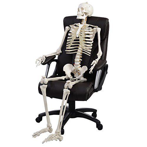 Anatomie Skelett Menschliches Skelett Anatomie Lehrmodell Mensch Skelett + Stativ Lebensgroß 181 cm
