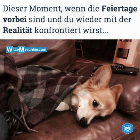 Dieser Moment wenn Sprüche - Feiertage - Trauriger Hund - Fail Bilder