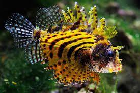 Peixe  Leão