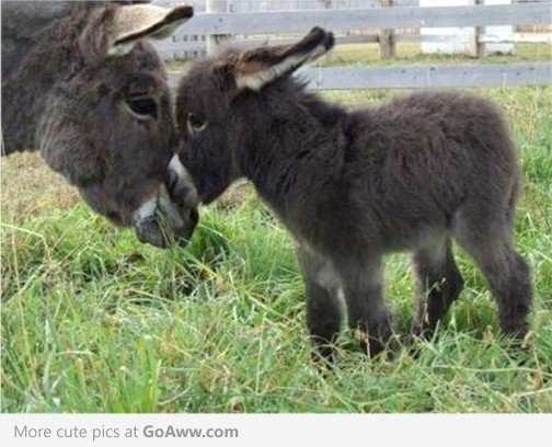 The cutest baby donkey