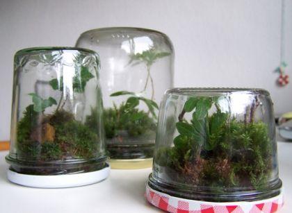 Kleines Terrarium
