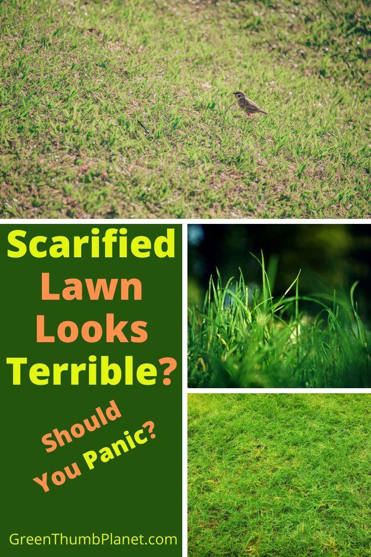 c3fc139d25b4b91684a85011ba9dc387 - How To Get Rid Of Clover Patches In Lawn