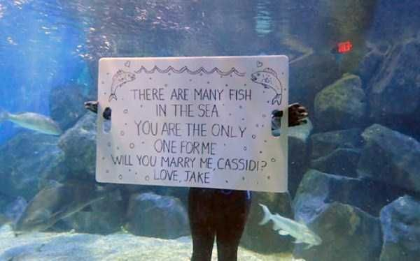 Which Fish Is She?! Ridiculous Marriage Proposals To Which The Answer Will Be No • Page 4 of 6 • BoredBug
