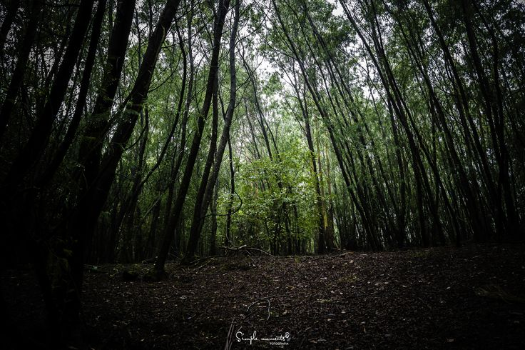 the little gree tree - null