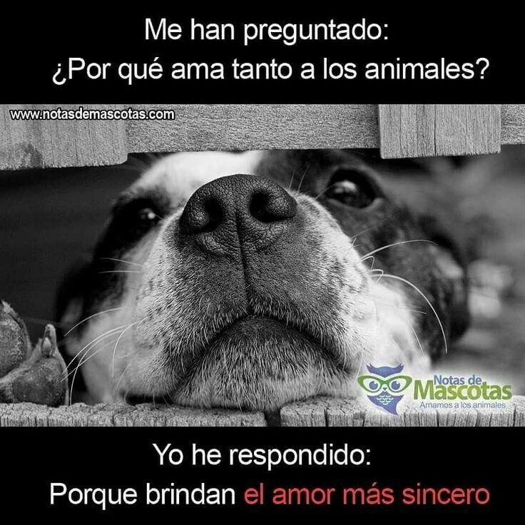 Pin De Claudia Moreno En De Todo Y Mucho Más Perro Mejor Amigo Perros Frases Amor De Perro