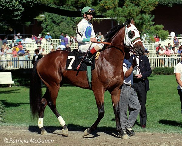 Innkeeper a son of Secretariat,at Belmont Park on October 7, 1990, when he finished fourth in a maiden race. Photo: Patricia McQueen Still alive at Old Friends Farm at age 28 in 2016
