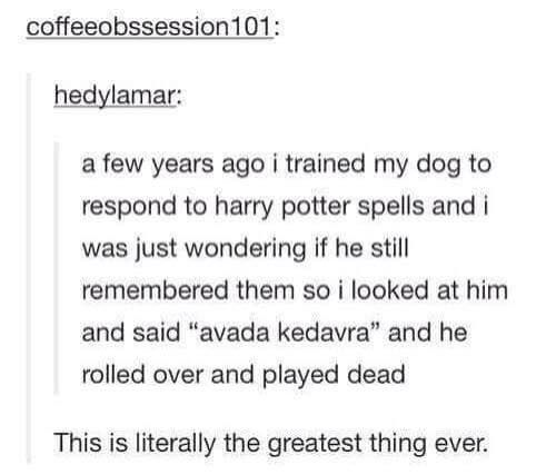 If I ever have another dog, I'm naming him Sirius or Padfoot and I'm doing this!
