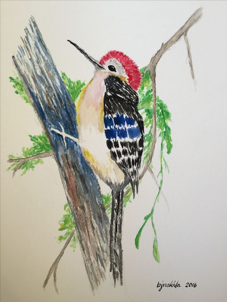 Red bellied woodpecker Painting, Art, Animals