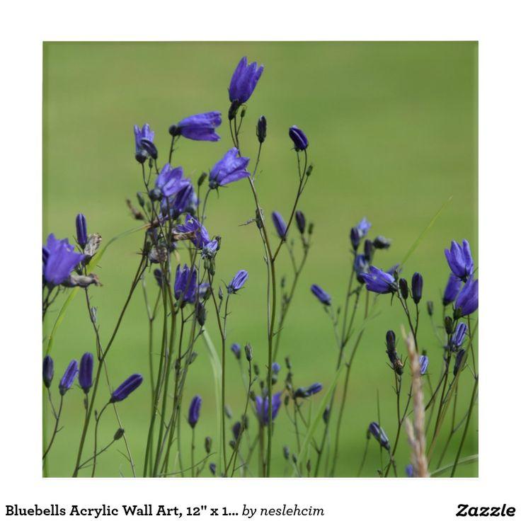 "Bluebells Acrylic Wall Art, 12"" x 12"" Acrylic Print Sold by #Zazzle http://www.zazzle.com/bluebells_acrylic_wall_art_12_x_12_acrylic_print-256634414917027582?rf=238901250819094787"