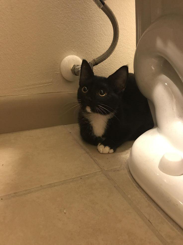 Name my kitten! She's 4 months old http://ift.tt/2wKTRR5