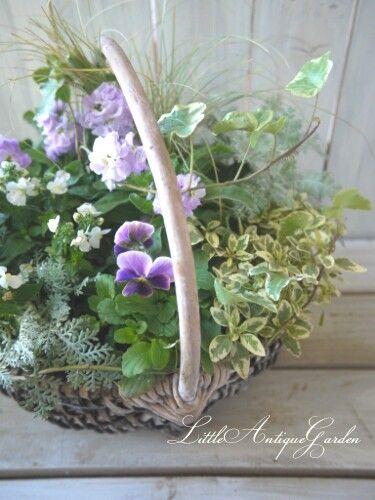 #花かご #シャビー#ナチュラル#ビオラ#ストック#春まで咲く#寄せ植え#ガーデニング#garden#antique#shabby