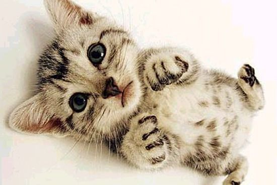 cute baby animals | Top 10 Cutest Baby Animals Who Wants One?