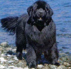 Cães: Terra-Nova