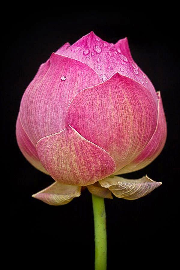 lotus divorced singles Exclusivement formulé pour les peaux au bout du rouleau, le tout nouveau  masque lotus youth preserve rescue mask, vient apaiser instantanément les.