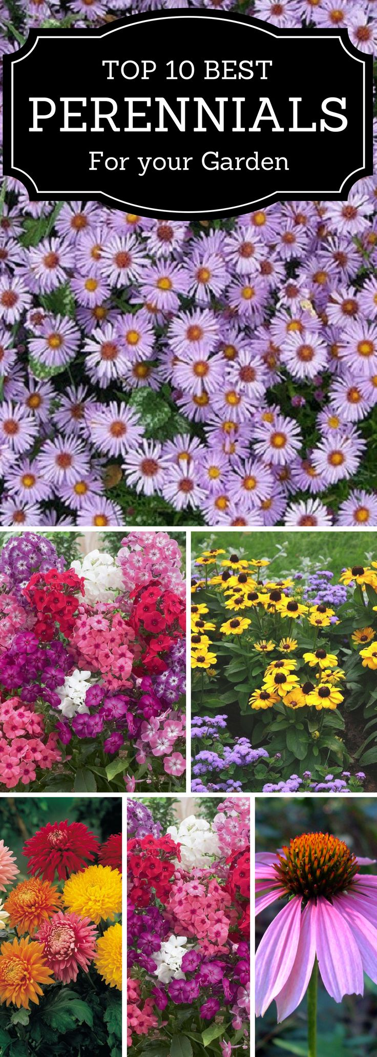 Asters &mums for fall, , coneflowers & black eyed susans for summer, daylilly & irises for spring