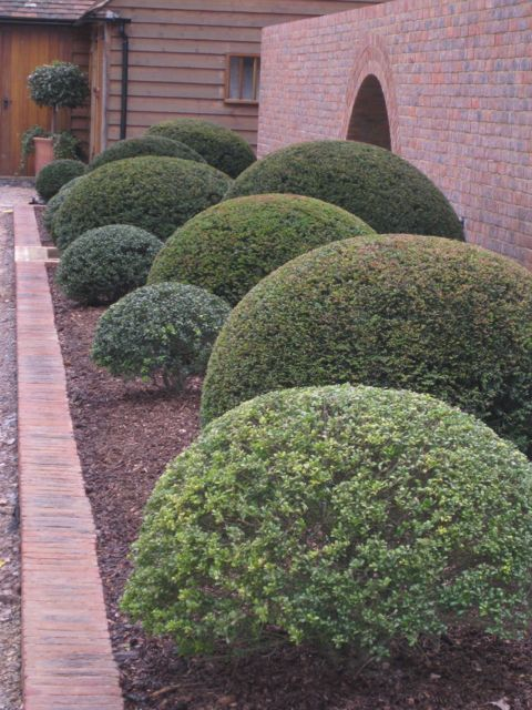 Blobs in a garden done like this are simple yet stunning