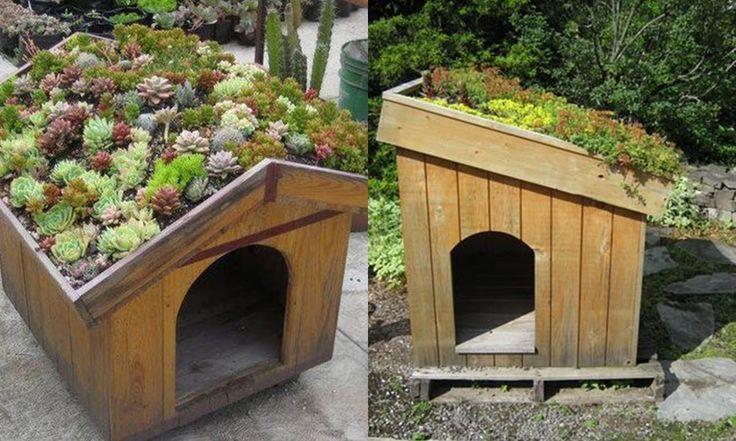 Nagyon zöld kutyaházak! – Hobbiallat.hu