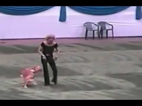 Dog and owner perform a Grease dance routine! THIS IS AMAZING! Do you know all the training and time it would take to do all that! and the dog loves it! it's like he's got a smile on his face the entire time!  (After you click on the picture, click where is says to view on YouTube)