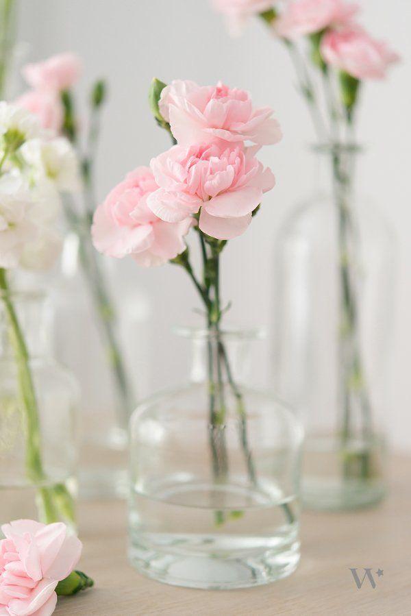 pink mini carnations