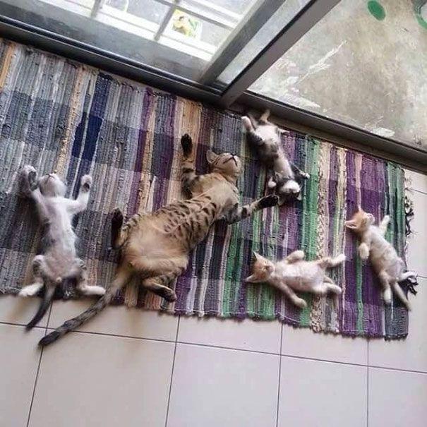 Sun Addicted Family