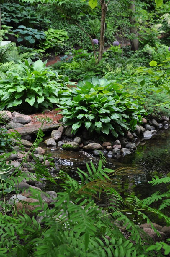 Shade garden planting - so cool and lush